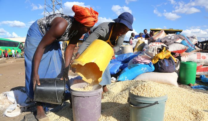 A Quiet Agricultural Revolution is Happening in Southern Africa